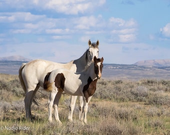 Bonita and Chico - Wild Mustangs of Sand Wash Basin - Fine Art Wild Horse Photography Print