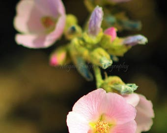 Flower Photo, Digital Download, Pink Flower Photo, Floral Photography, Printable Photo, Digital art, Desert Photography, Wild Flower Photo