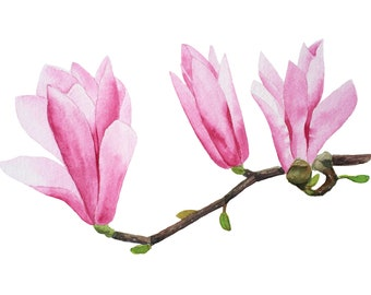 Pink magnolia flower. ORIGINAL watercolor painting