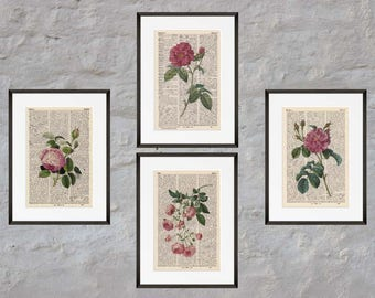 Prints set of 4 - rose - Antiquarian Book page