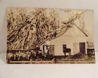 Antique 1910  Photo Kansas Postcard  of Land of Big Corn