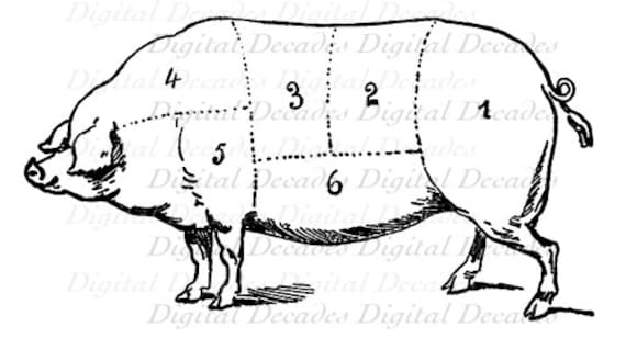pork pig cochon butcher meat cut chart cooking digital image