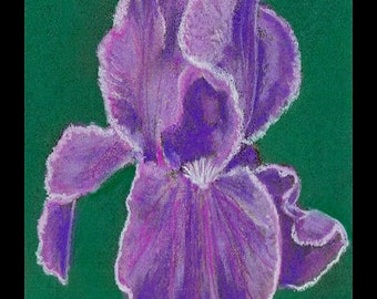"PRINT of Original Signed Pastel Painting, Flower Artwork, ""Amazing Iris"""