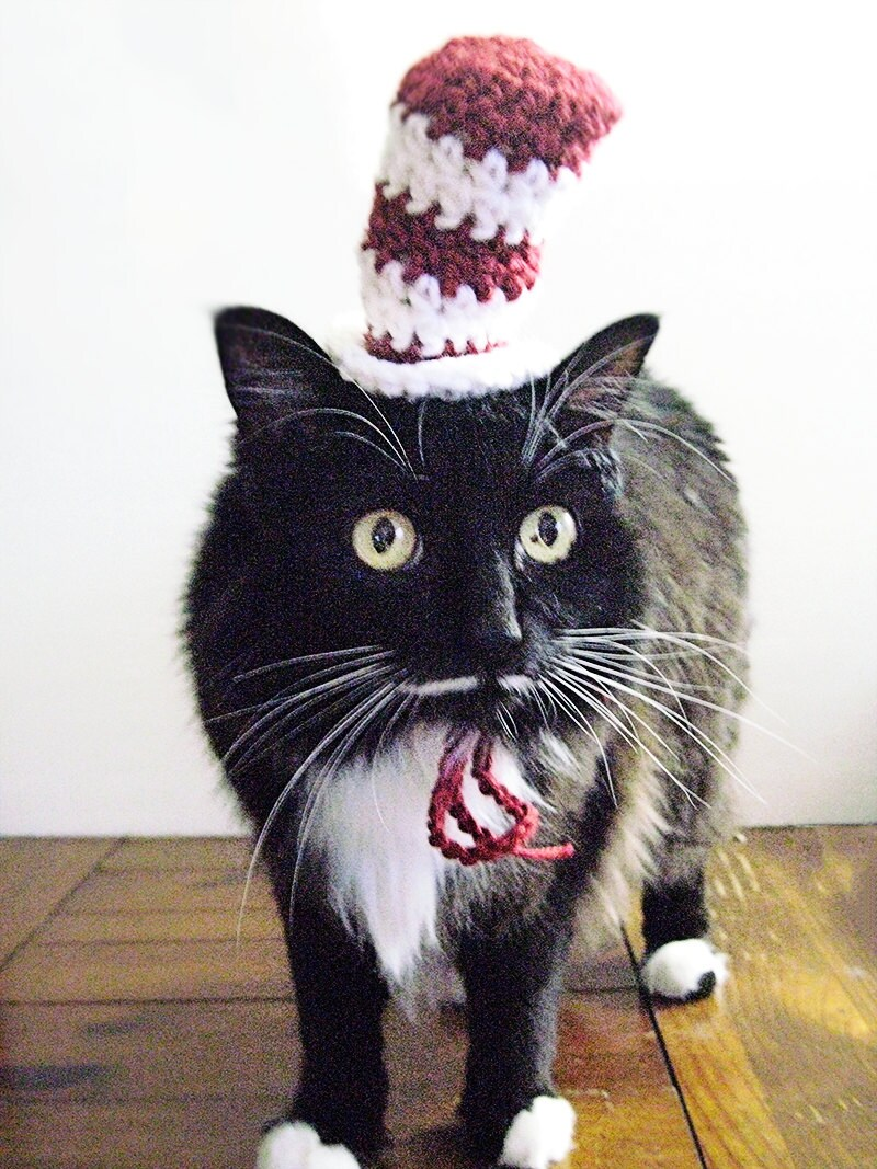 Crochet Cat Hat Pattern Hat For Cat Halloween Cat Hat Crochet Cat