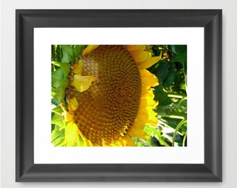 Sunflower photography. Fine art photography print, Wall Art, Home Decor