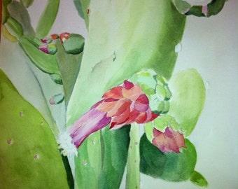 Key West Cactus
