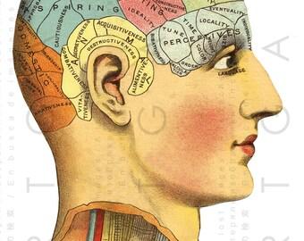 PHRENOLOGY HEAD Antique ILLUSTRATION. Science Of The Mind Chart Vintage Phrenology 19th C Print. Digital Phrenology Download.