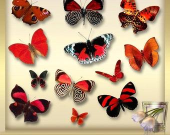 12 Butterflies Clip Art Vol. 3 - Butterfly Overlays -  Photoshop Overlays - Butterfly Overlay -  red Butterflies -  Instant Download - png