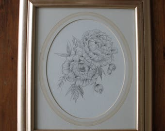 Peony flower pencil drawing, framed