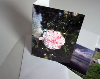 A5 Pale Pink Flower Photograph Greeting Card