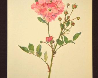Pink Flower Print Pink Rose Print Floral Print Floral Plate