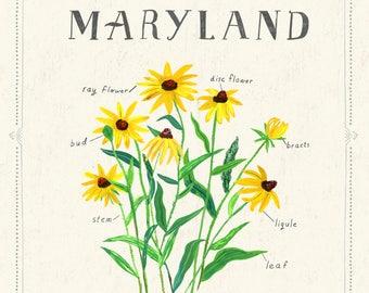 Maryland State Flower, Black Eyed Susan