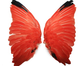 Real scarlet ibis wings 2 / taxidermy / stuffed / tropical bird / curiosity / feathers