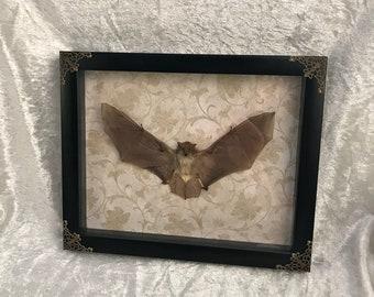 Framed Bat - Neutral Victorian