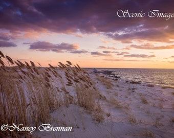 Beach Grass Purple Sunset at Jones Beach West End