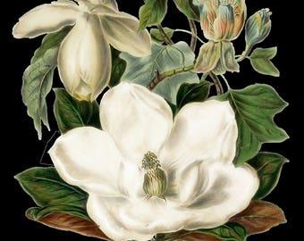 Temporary tattoo - Magnolia flower