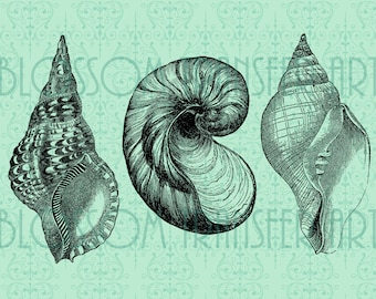 Winkles - Digital Graphics - Download Images - Transfer to pillows, totes, paper - Iron on fabric - DIY - 1640