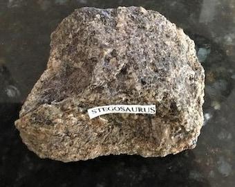 Stegosaurus Ungual (Claw), Dinosaur Fossil