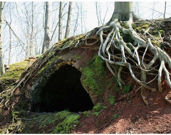 Creepy Cave in Broad Daylight Photo - Old Coke Mine Oven Photograph - Historic Ohio Photography - Green Mossy Brick Oven - White Tree Roots
