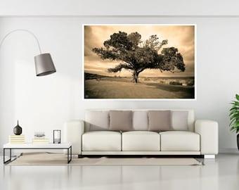 Tree Photography, Nature Photography, Large Tree Prints, Fig Tree, Large Tree Photos, Antique Style Tree Photo,Australian Flora Tree Art