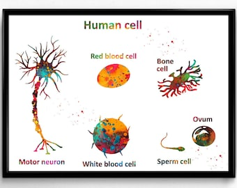 Human cell, motor neuron,red blood cell,white blood cell,bone cell,sperm cell,and ovum,medical art,science(1215)