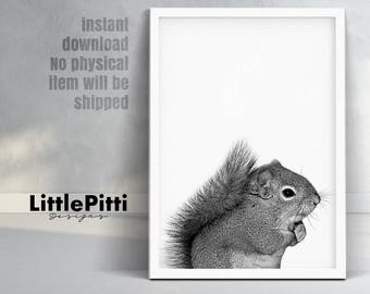 Squirrel, squirrel wall art, squirrel photo, woodland print, gray squirrel, downloadable print, gray wall art, woodland squirrel animal