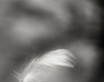 """black and white photography, feather, nature, gift, baby nursery, monochromatic wall art- 16x20, 11x14 or 8x10 photograph, """"Learning to Fly"""""""