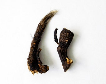 Osha Root - 2pc set, Bear Medicine, Medicine Bag, Traditional Herb, Herbal Magick, Divination