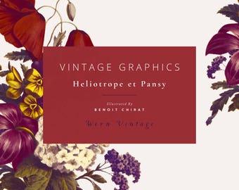 Vintage Clip Art & Graphics - Heliotrope Et Pansy - Worn Vintage