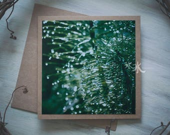 Floral Photo Card - Horsetail - Equisetum