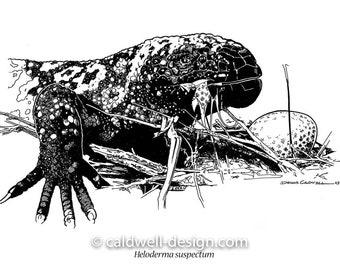 Gila Monster Eating Quail Eggs