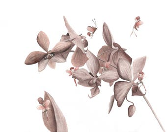 Original painted illustration of children's book published in 2013: 8 fairy Orchid - 1 copy of the book published in