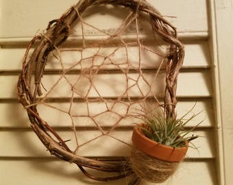 Wall hanging Air Plant