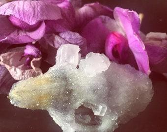 Crystallized Cavia Porcellus Skull Specimen
