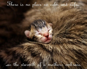 Mothers Day Gift // Cat Quote Print // Newborn Kitten Photo // Mother's Embrace Quotes // Mother's Love Quotes // Gift for Mom