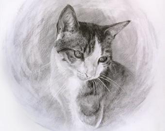 Custom Graphite Pet Portrait 14.8 x 21 cm, Art Commission, Pencil Drawing of Your Pet, Dog Cat Horse Parrot Tortoise...