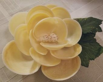 Seashell magnolia flower