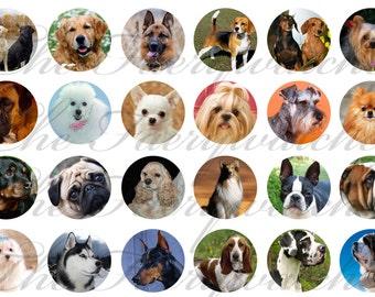 "1"" Inch Popular Dog Breeds Pins, Magnets or Flatbacks 12 Ct."