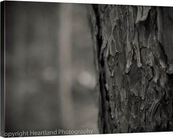 Large Canvas Print, Black and White, Nature Photography, Pine Tree Art, Boundary Waters, Canvas Gallery Wrap, Large Nature Canvas, Large Art