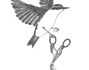 nuthatch absconds with your embroidery scissors ORIGINAL artwork ink drawing illustration 6 x 8