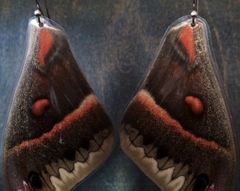 PEI Earrings: Real Prince Edward Island Cecropia moth forewings!