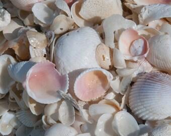 Shells tile 6x6