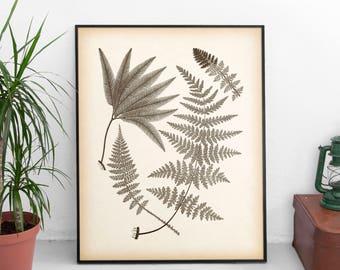 Antique fern print, Art print vintage, Printable print, Instant download fern illustration, Botanical art print, Vintage home wall art, JPG
