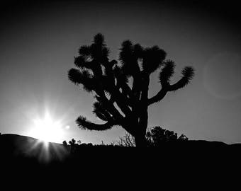 Black and white photo,B&W photography, Joshua tree, national park, california, yoga room, nature photography, modern decor, meditation room