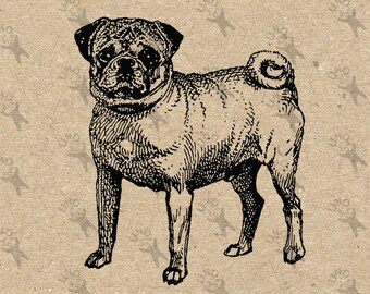 Retro image Pug Dog Instant Download Vintage Digital printable clipart graphic Burlap Fabric Transfer Iron On  Decor Scrapbooking HQ 300dpi