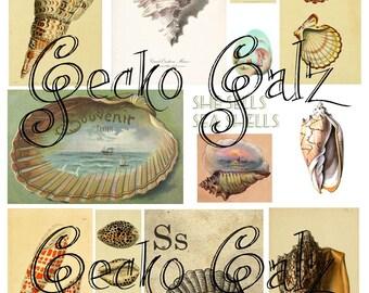 She Sells Sea Shells Digital Collage Sheet