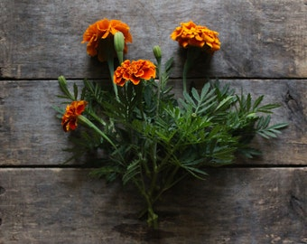 French Marigold, organic seeds, heirloom seeds, flower seeds, organic gardening, natural pest control, companion planting, gardener
