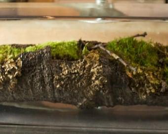 terrarium moss one of a kind