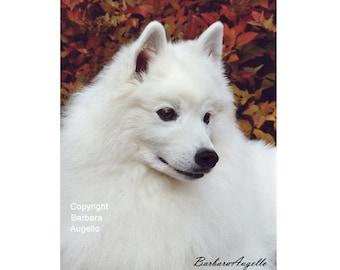 American Eskimo Dog Flag, American Eskimo Dog Gift, American Eskimo Dog Art, American Eskimo Dog