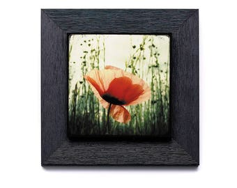 Hatching poppy - on small frame with photo collage 22x22cm